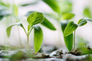 Jakie rośliny ozdobne wysiewa się i sadzi w maju?